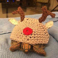 Little chick tortoise cozy Tortoise House, Cute Tortoise, Baby Tortoise, Sulcata Tortoise, Turtle Costumes, Pet Costumes, Turtle Sweaters, Happy Turtle, Turtle Habitat