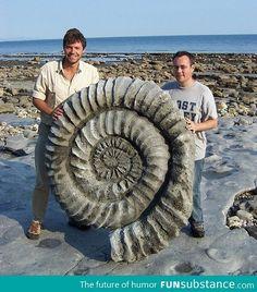 Million year old ammonite