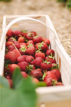 Stock photo of detail of fresh red strawberries in a wooden basket by Nox Strawberry Farm, Strawberry Picking, Strawberry Patch, Strawberry Fields, Fruits And Vegetables, Farmers Market, Blueberry, Food Photography, Pumpkin