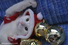 Gatos. Gato. Cats. Cat. Angora. Navidad. Christmas. http://www.raquelbegue.com