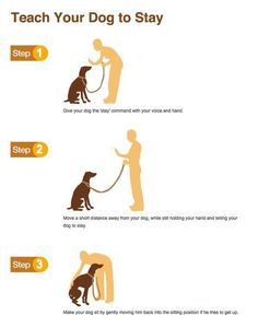 Dog Obedience Training – Dog Training Tips Online – And Free! Puppy Training Tips, Training Your Dog, Potty Training, Crate Training, Service Dog Training, Training Collar, Obedience Training For Dogs, Clicker Training Puppy, Husky Training