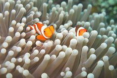 Couple of nemo in their palace!