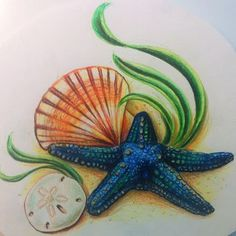 Starfish drawing with sand dollar and shell done with pencil crayons! Sea Life Tattoos, Sea Tattoo, Ocean Tattoos, Mermaid Tattoos, Love Tattoos, Body Art Tattoos, Tatoos, Starfish Drawing, Starfish Art
