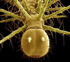66 best tiny things under a microscope images microscopic