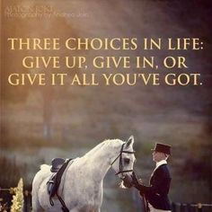 equestrian quotes never give up horse quotes Quotes Horse Riding Quotes, Horse Quotes, Cowboy Quotes, Equestrian Quotes, Miss You Dad, Most Beautiful Animals, Sharing Quotes, Money Quotes, Inspirational Thoughts