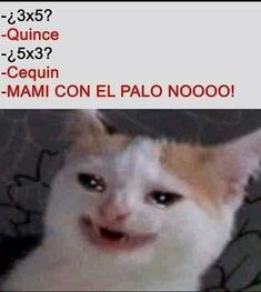 Min Yoongi un empresario muy conocido por el mundo . Park Jimin el un… #detodo # De Todo # amreading # books # wattpad Funny Spanish Memes, Spanish Humor, Stupid Funny Memes, Funny Relatable Memes, Memes Humor, New Memes, Pinterest Memes, Mexican Memes, Comedy Central