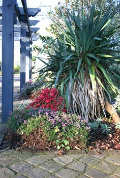 One of the borders in our display garden shows just how a few well placed plants can brighten any garden in winter.