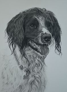 This is 'Ferdy', a 4 year old Springer Spaniel. His best buddy is Monty, another Springer (another drawing who I will be posting a photo of shortly) who visits at the weekends, and they love walking together through the woods. Ferdy was drawn Good Buddy, Springer Spaniel, Realistic Drawings, Spaniels, Dog Art, Wood Burning, Pencil Drawings, Dog Breeds, Woods