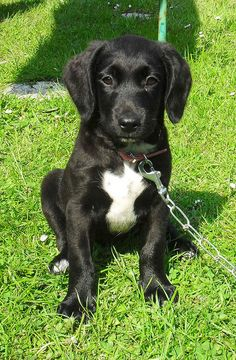 MiLLiE 25th May 2012 by MiLLiE MEADOW, via Flickr
