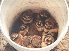Фото: Обиженные забавные милые совушки (Фото)