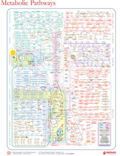 This poster is not even close to comprehensive but it's cool. Metabolic pathways #biochemistry