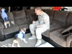 Beagles Welcome Home U S Marine From 7 Month Deployment in Afghanistan - YouTube