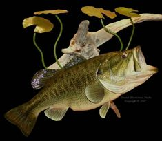 largemouth bass pictures | LARGEMOUTH BASS-