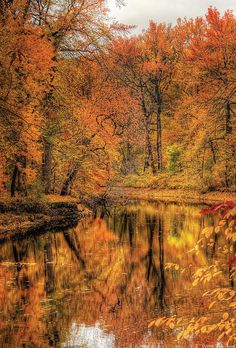 Autumn - Landscape - Autumn In New Jersey Photograph by Mike Savad Love Stories To Read, Pumpkin Leaves, Autumn Leaves, Forest Light, Wallpaper Space, Autumn Scenes, Aspen, Vintage Images, New Jersey
