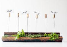 Corchos indicadores de plantas.  Beso de Vino