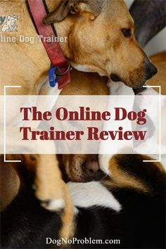 You will learn by watching over 250 videos dedicated to eliminating almost all dog-related behavioral problems, fast and effectively. Some videos are free: click here on the image to watch them right now... #dogtraining #dogobedience #onlinedogtraining #puppytraining Online Dog Training, Dog Training Courses, Dog Training Videos, Training Your Dog, Free Dogs, Weimaraner, All About Time, Watch, Learning