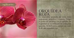 Descubre tu flor en: Facebook.com/Novaventa