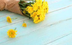 Download wallpapers yellow chrysanthemums, spring bouquet, yellow flowers, spring, chrysanthemums