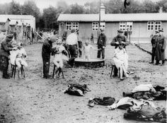 Buchenwald death, Germany, The shaving and washing of new Jewish inmates. They would be used for slave labor. No record of any surviving. Death could have been from gas when they were no longer useful, starvation, disease, torture, shot