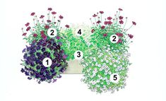 Blumenkasten Idee mit Petunie, Schokoblume, Schokoladen-Minze, Zauberschnee, Petunie