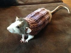 Have to add this because...well...who would have thought of making a sweater for a ...rat? Ravelry: Rat sweater pattern by Anne Knight