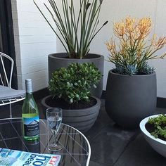 LOVING this by @leafstonewater such an awesome pot/plant combo! I know where I'll be spending my Friday night!?!?  + + + #thebalconygarden #design #styling #TGIF #weekendvibes #getoutside #outdoorliving