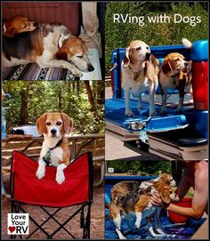 Great advice for RVing with dogs from the Love Your RV! blog - http://www.loveyourrv.com/ #RV #pets