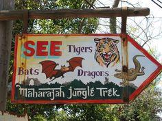 Animal Kingdom -- Maharajah Jungle Trek