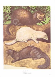 Your place to buy and sell all things handmade Antique Books, Ferret, Woodland, 1970s, Looks Great, Moose Art, Wildlife, Colours, Fantasy