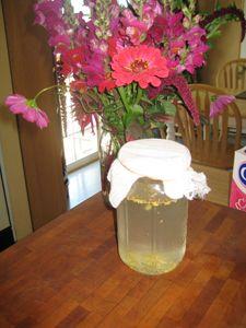 Fermented Soda Recipe: Blueberry Soda http://www.learningherbs.com/soda_recipe.html