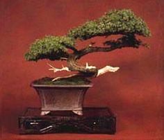 ARTISTIC BONSAI PLANT...........