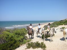 Trail on the beach. Andalusian horses. Dressage in Spain,
