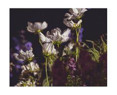 Dark Flower Photography by JillianAudreyDesigns on Etsy