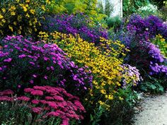 Create a butterfly garden,list of plants aster, black-eyed Susan, butterfly bush, butterfly weed, cosmos, ironweed, Joe-Pye weed, phlox, purple coneflower, sedum, and zinnia. Include food plants for the larvae, dill, fennel, milkweed, and parsley.