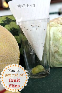 hip2thrift: How to get rid of fruit flies