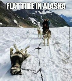 Funny pictures about Alaskan Flat Tire. Oh, and cool pics about Alaskan Flat Tire. Also, Alaskan Flat Tire photos. Funny Pictures With Captions, Picture Captions, Funny Animal Pictures, Hilarious Pictures, Funny Photos, Cute Animals With Funny Captions, Funniest Pictures, Snow Pictures, Animal Pics