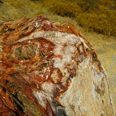 A beautiful detailed shot of the mineralized tree stump at the petrifird forest; the red color is iron and is very well visible (Lesvos, Greece)