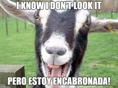 Mexican Sayings That Sound Ridiculous When Literally Translated Into English - Neatorama