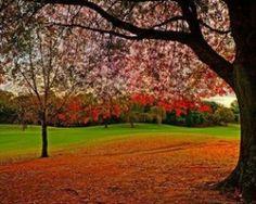 Area in Focus: Killarney Cities, Golf Courses, Career, Carrera, City