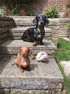Three little friends .