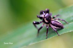 photo macro araignée