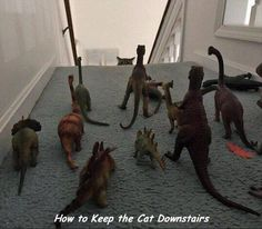 How Can I Keep My Cat Downstairs