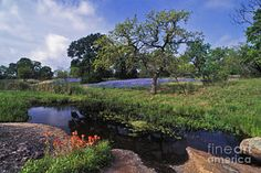 Texas Photograph - Texas Hill Country - Fs000056 by Daniel Dempster