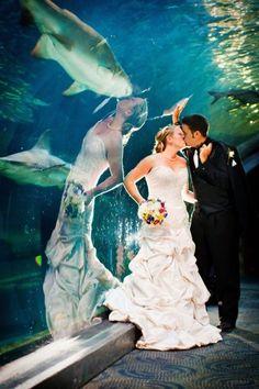 mujer con vestido de novia besando un tiburon