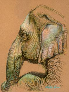 Nafisa Naomi elephant drawing