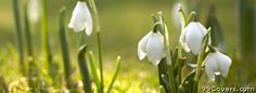 flowers snowdrops Facebook Cover