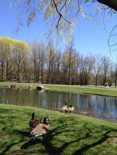 Parc Michel Chartrand, Longueuil, Qc Michel, Quebec, Montreal, Pictures, Park, Photos, Quebec City, Photo Illustration, Resim