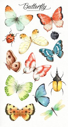 color palette copies The set of high quality hand painted watercolor butterfly images in bright and fresh color palette. Included moth, dragonfly and ladybug. What do you get: 21 x Butterfly Images, Butterfly Drawing, Butterfly Watercolor, Butterfly Colors, Monarch Butterfly, Watercolor Clipart, Watercolor Paintings, Watercolor Tattoos, Painting Art