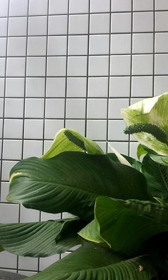 aesthetic, aesthetics, bambi, bathroom, green, grid, plant, plants, green bambi