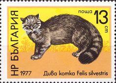 Stamp%3A%20Wildcat%20(Felis%20silvestris)%20(Bulgaria)%20(Wildlife)%20Mi%3ABG%202600%2CSn%3ABG%202407%2CYt%3ABG%202309%20%23colnect%20%23collection%20%23stamps